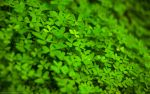 Green Leaves Wallpaper by l32
