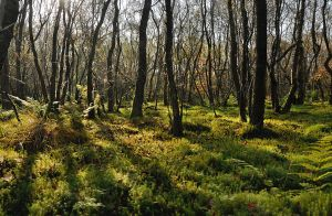 Hillhead Wood II by younghappy
