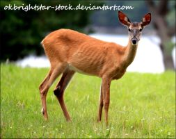 Deer 4 by okbrightstar-stock