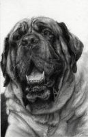 English Mastiff Commission by LindseyWArt