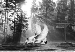 Lost in Paradise - Manip by HKW1994