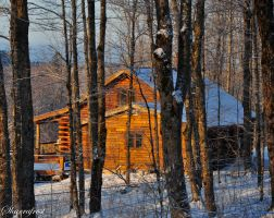 Life in the SugarBush by Brian-B-Photography
