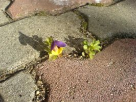 Pavement flower by lonely--soldier