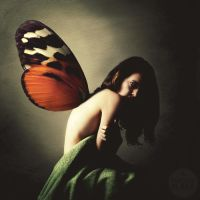 butterfly phobia by photoflake
