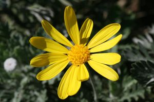 flower3 by KnB-Stock