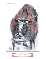 Baboon Mojo by JohnHLynch