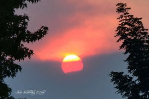 King Fire Sun by Scooby777
