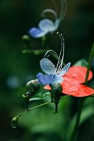 Butterfly flower love by PoppyHunter