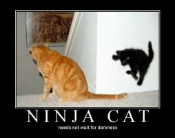 ninja cat by Jaffar8