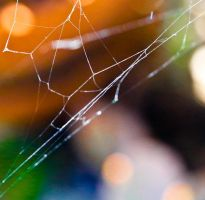 Spider Web by ItsAudrea