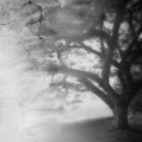 Tree and time by PansaSunavee
