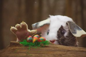 the guinea pig loves the colorful eggs by hizsi