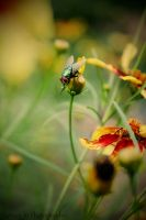 Hello Mr. Fly :p by lynseyjophotography