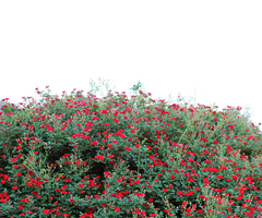FLOWER GARDEN PNG TRANSPARENT - USE FREE by TheArtist100