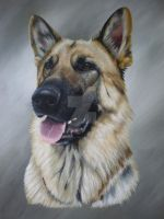 Razor by petportraitman
