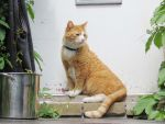 Tommy, the 3 Legged Cat by Kitteh-Pawz