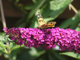 Butterfly 22-07-2015 by 69raywwf