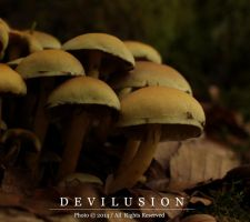 mushrooms 2 by D3vilusion