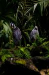 Birds of a Feather by greetz