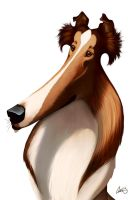Rough Collie Caricature by CharReed