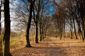 GoldenPath by ghito