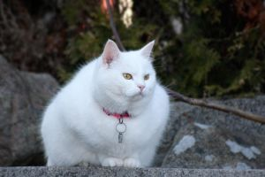 Snow white cat by BlastOButter
