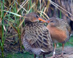 Clapper Rails by Ironpaw