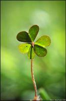Clover by diegoreales