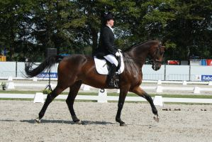 Outdoor Brabant Stock 23 by chronically