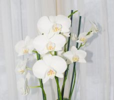 White flowers - 1 by creatief2