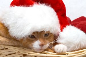 Christmas Cat 2 by dcode12
