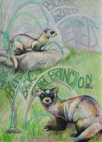 Black Footed Ferrets by xRoccox