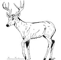 Whitetail Buck by BamaBelle2012