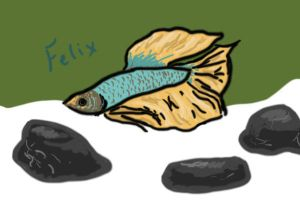 Betta Fish: Felix by myexplodingcat