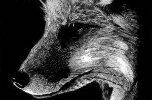 Scratchboard Fox by OneColoredLily