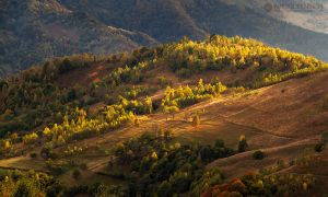 Autumn colors in Apuseni Mountains 2 by adypetrisor