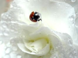 Coccinnelle 19 by eco6org