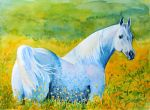 The horse among the flowers by olgaprokop