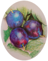 Plums by angel-of-shadows138