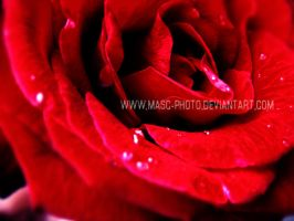 ReD by Masc-Photo