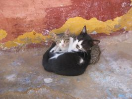 Egyption Kittys by Misguided-Ghost1612