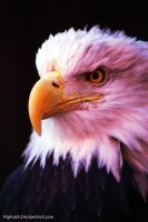 But I'm not bald! by Riphath