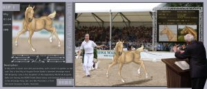 HEWA Auction Foal bred by RPS by abosz007