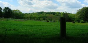 Pastoral Silhouette by ARAbbey