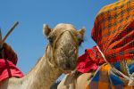 Colorful camel by DeviantTeddine
