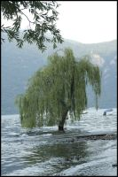 Tree in the water. by mealde