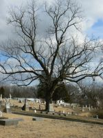 Tree Hill Tombstone by BohemianHarlot