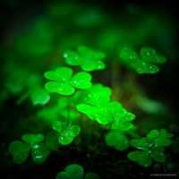 Vibrant Green by DREAMCA7CHER