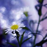 bokeh was my first love by Lisa-Schneider