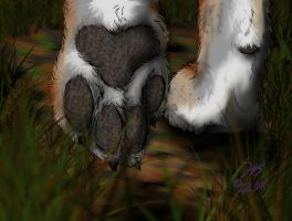 Wolf Paws by WolfScribe